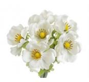 Květ Anemon, bílá, 1ks