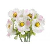 Květ Anemon, bílorůžová, 1ks