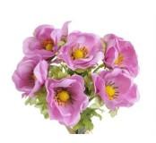 Květ Anemon, fialovorůžová, 1ks