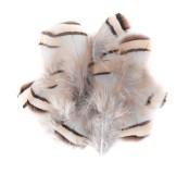 Dekorační peříčka bažantí, 5-7cm, 15ks